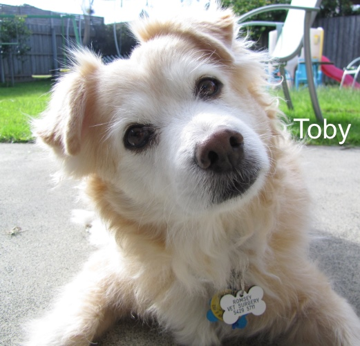 Toby 1.jpg
