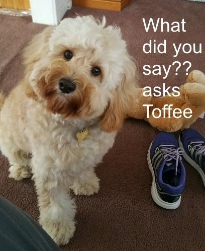 Toffee asks.jpg