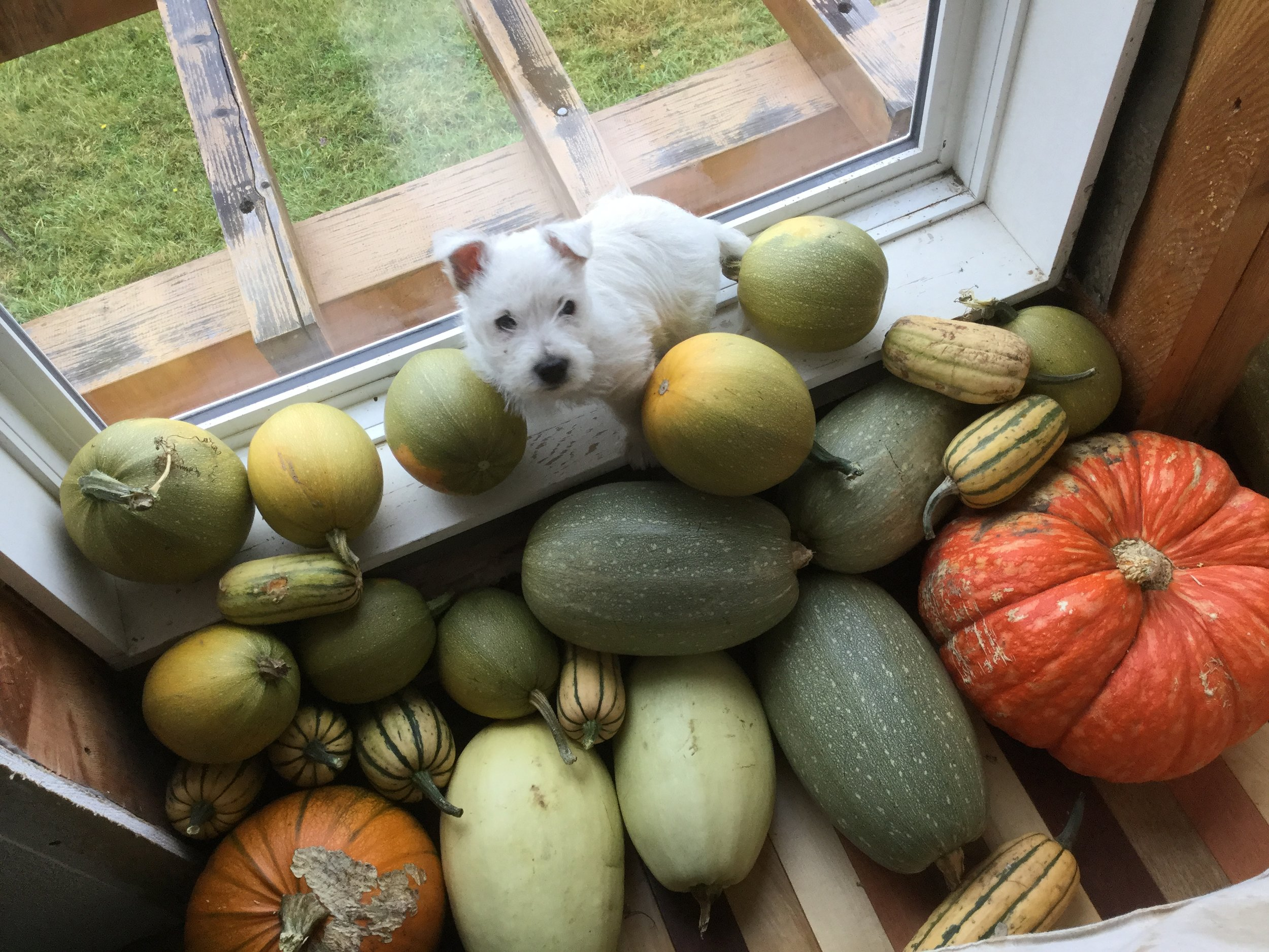 Home Grown on the Farm including the Pup.