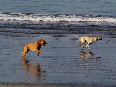 Dog Park Rosie's Dog Beach.jpg