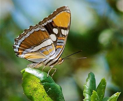 EDNC Butterfly Count.jpg