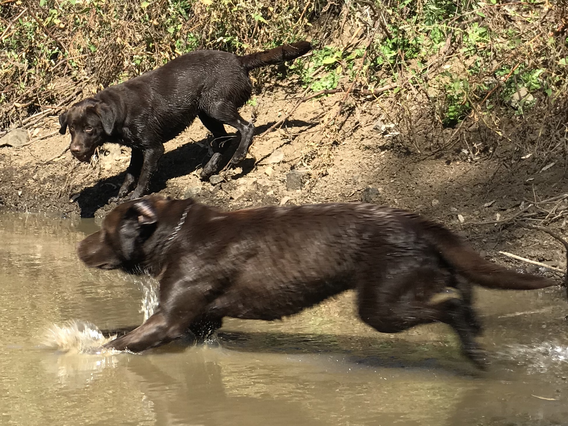 FETCHING in the dam