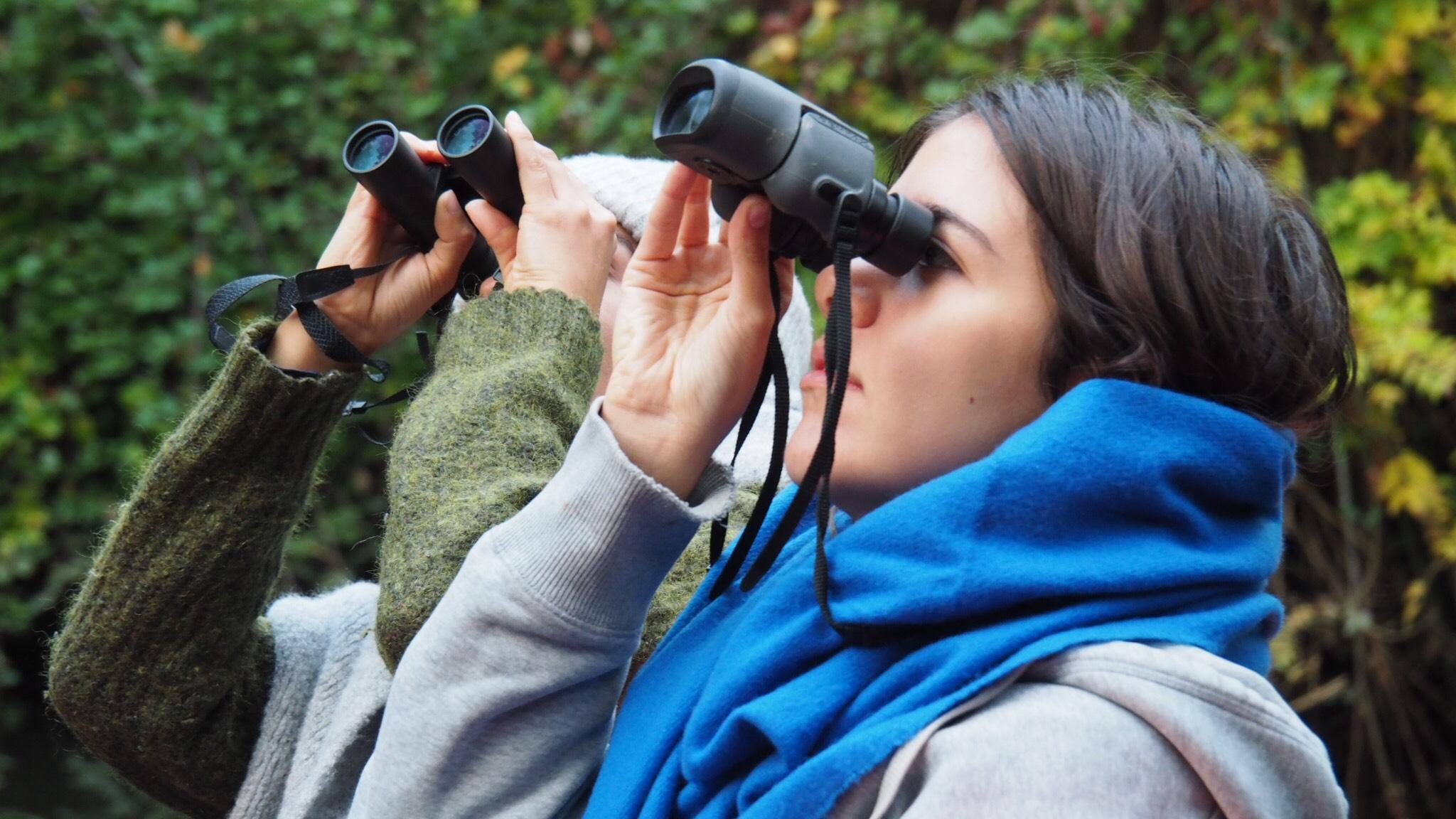 Bird watching in the Teich bird reserve