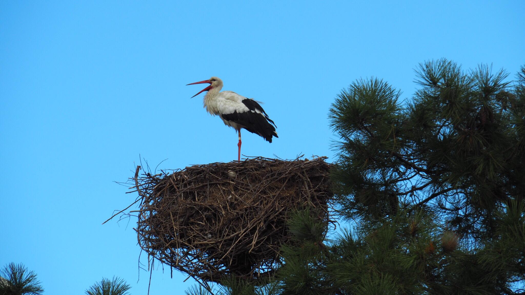 Stork in the Teich bird reserve