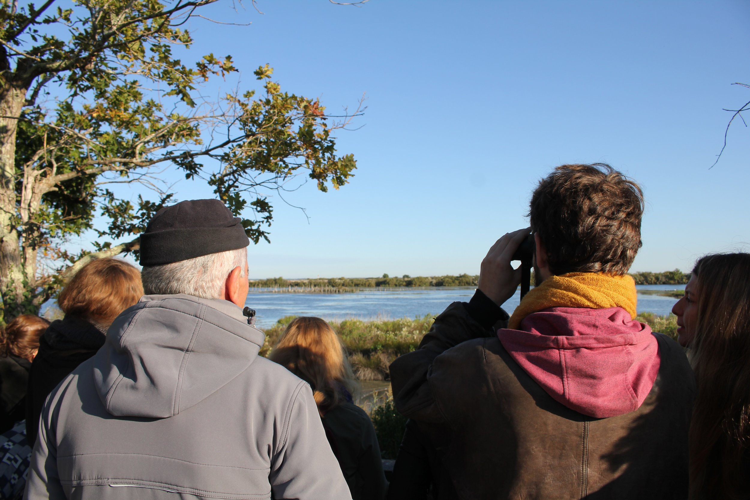 Bird watching with an ornithologist for the Teich bird reserve
