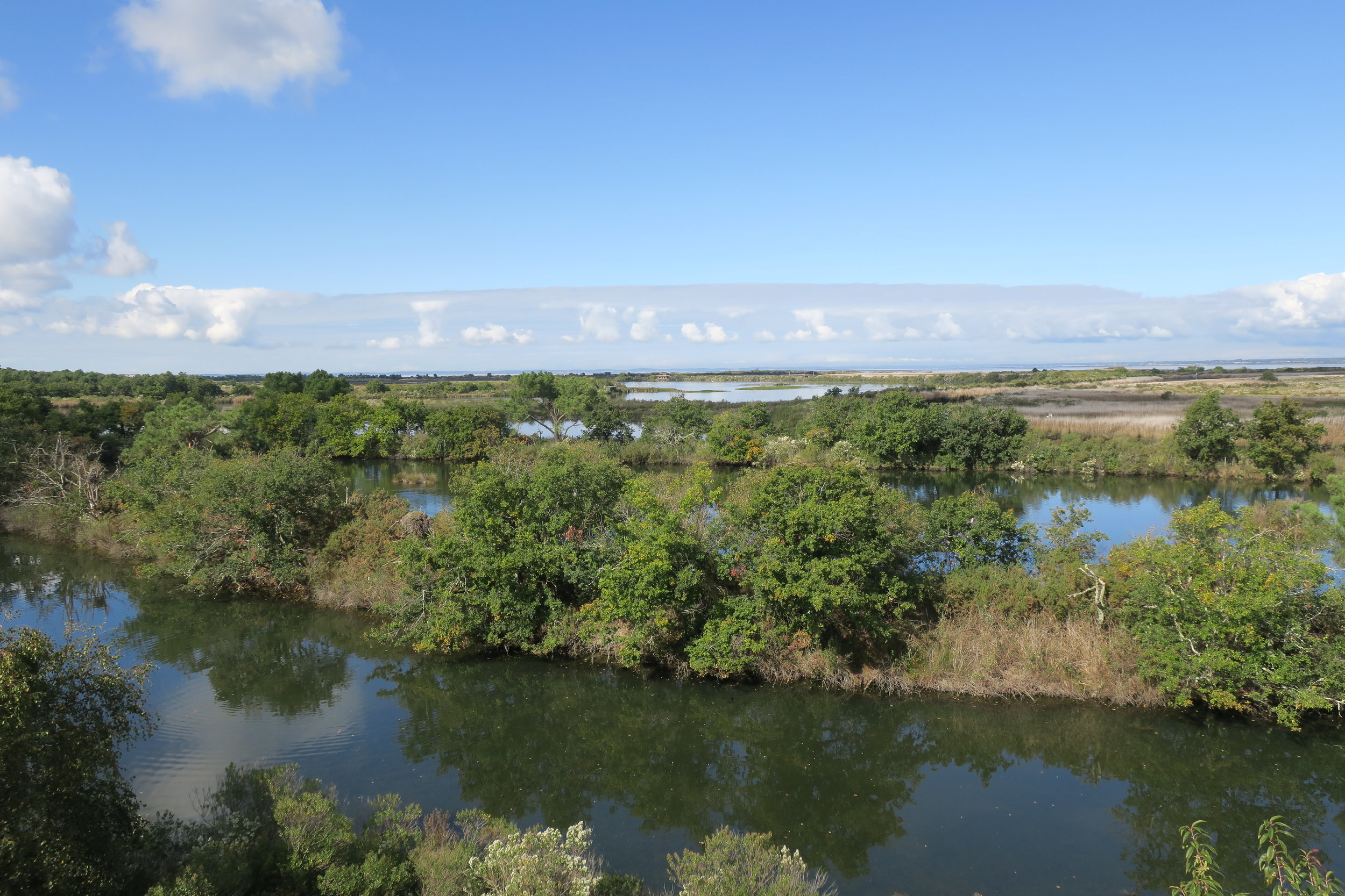 Teich bird reserve ecosystem in the Arcachon Bay