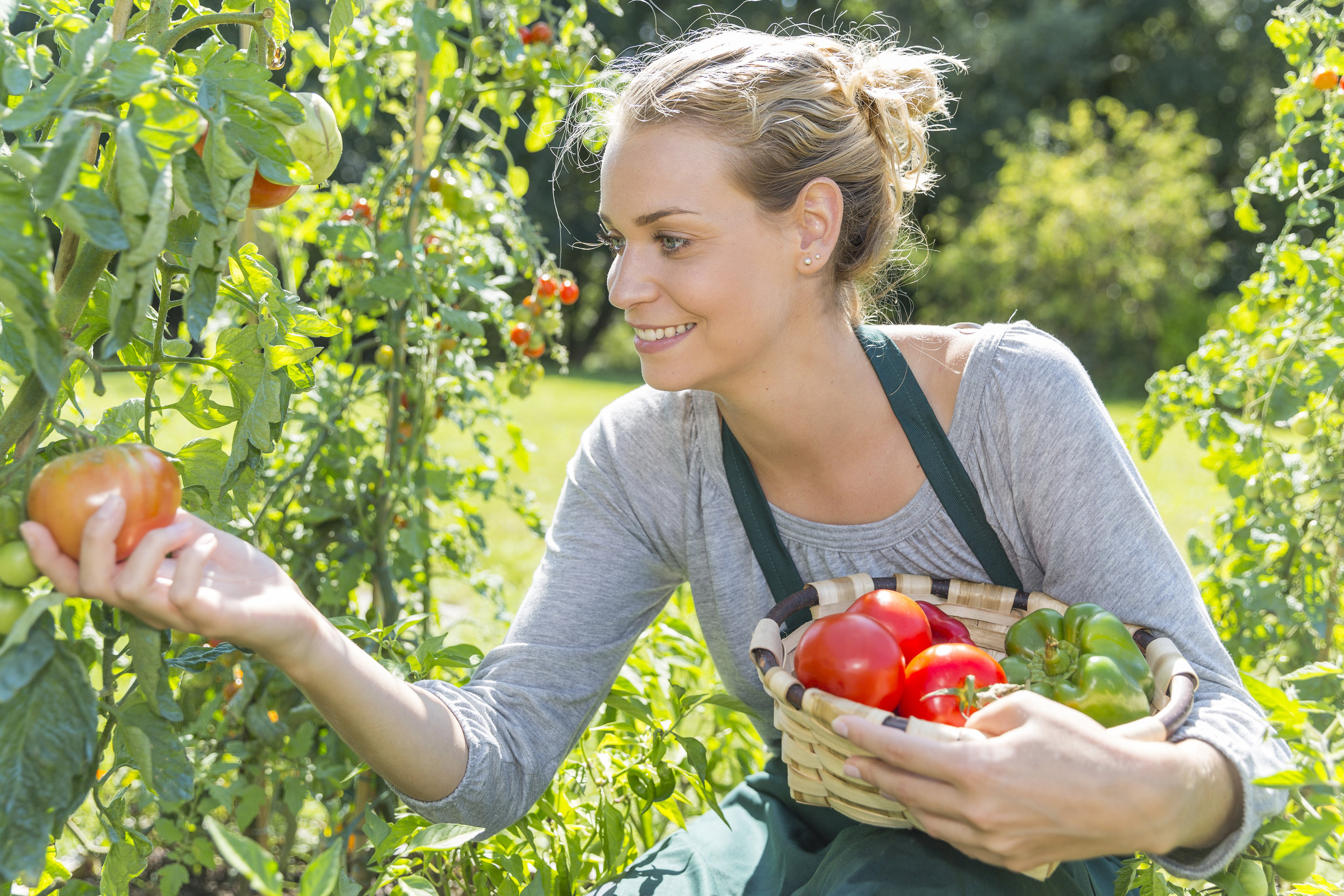 Woman picking tomatoes and peppers