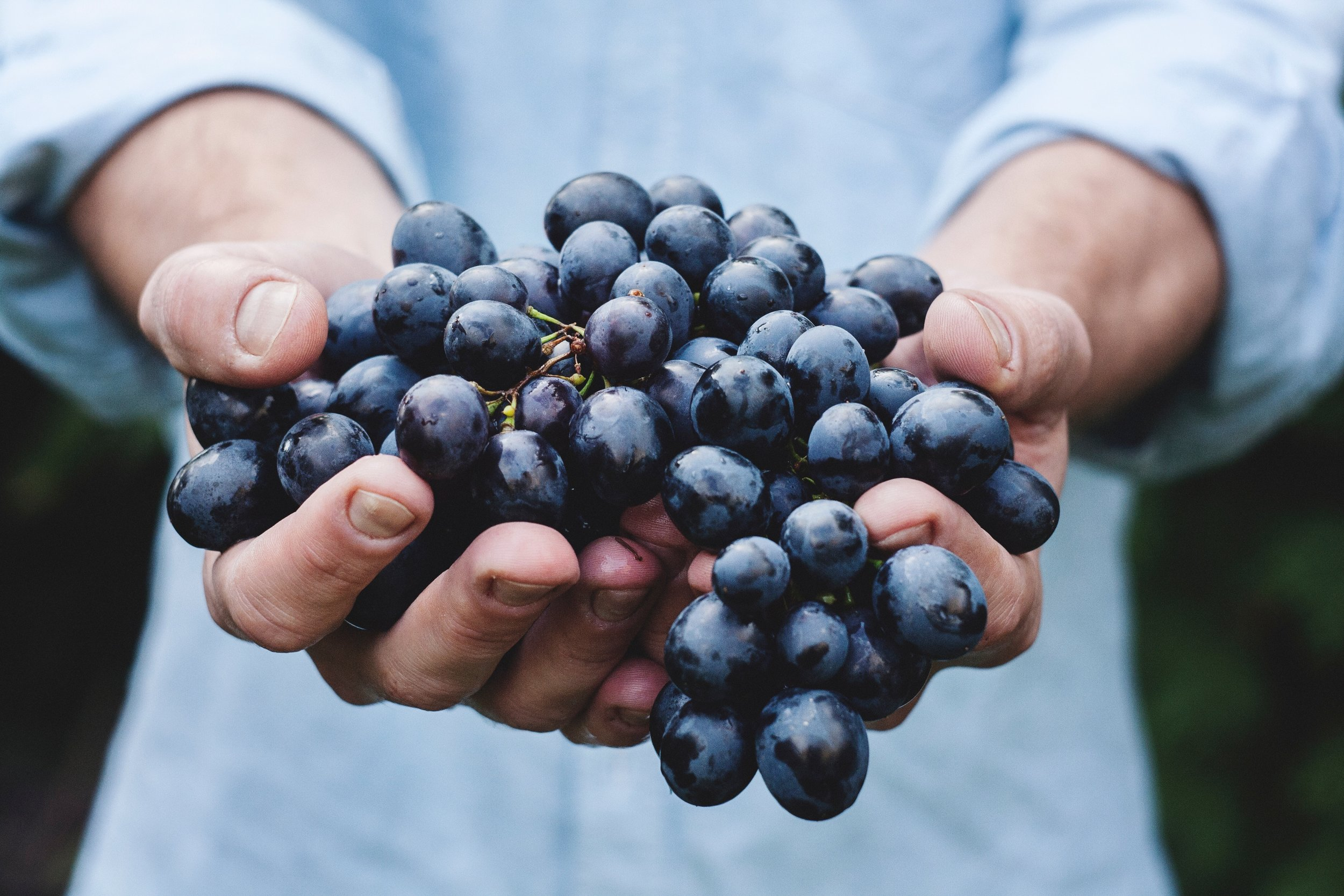hand full of grapes