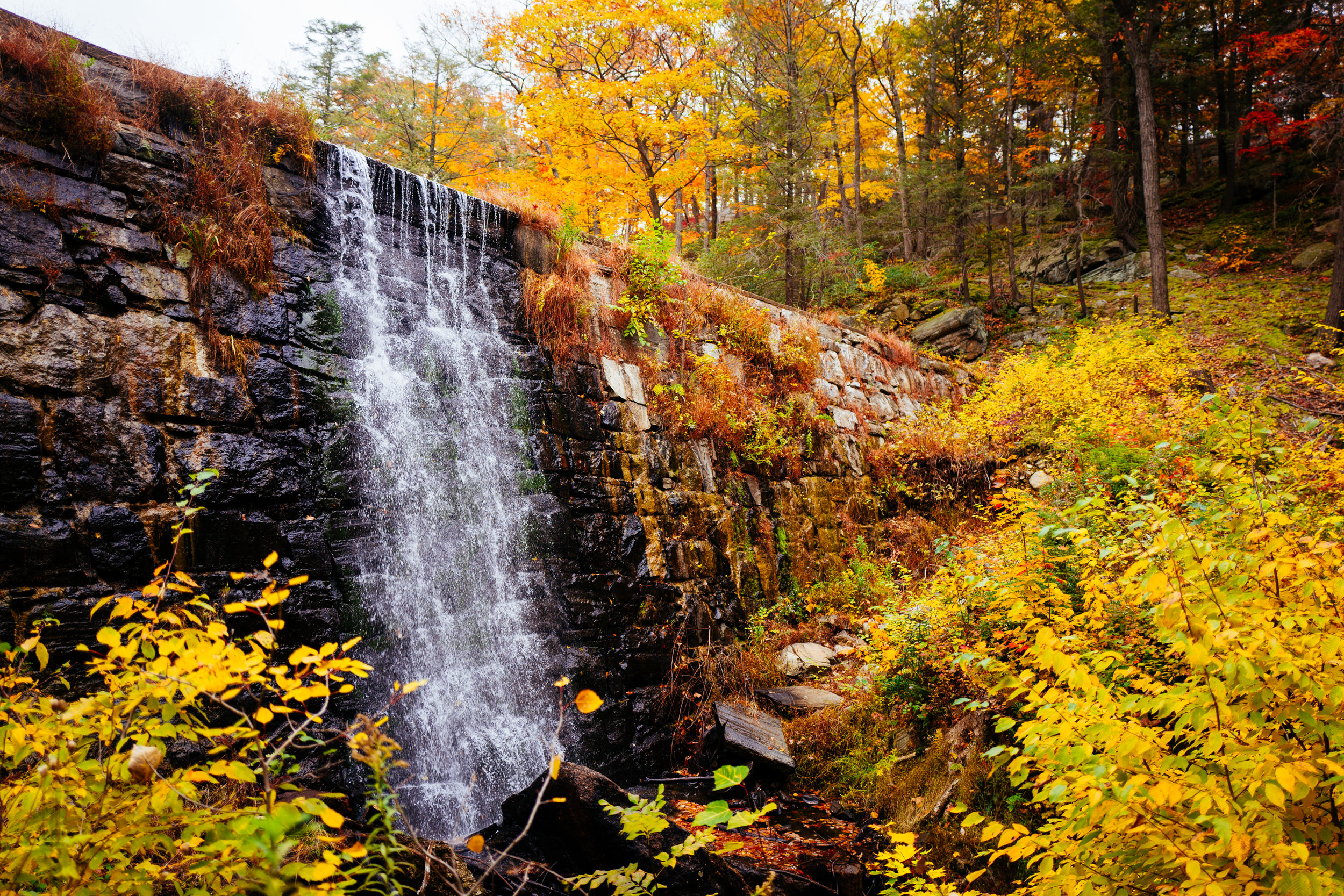 Photo Rhetoric - Black Rock Forest-1006.jpg