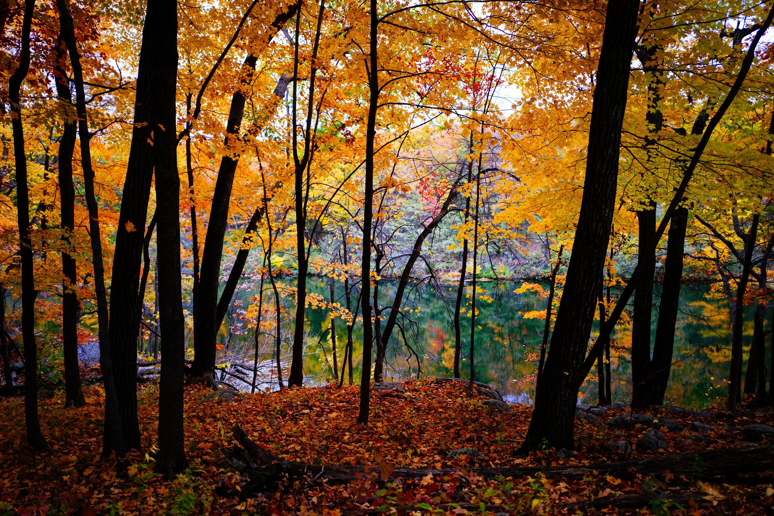 Photo Rhetoric - Black Rock Forest-1012.jpg