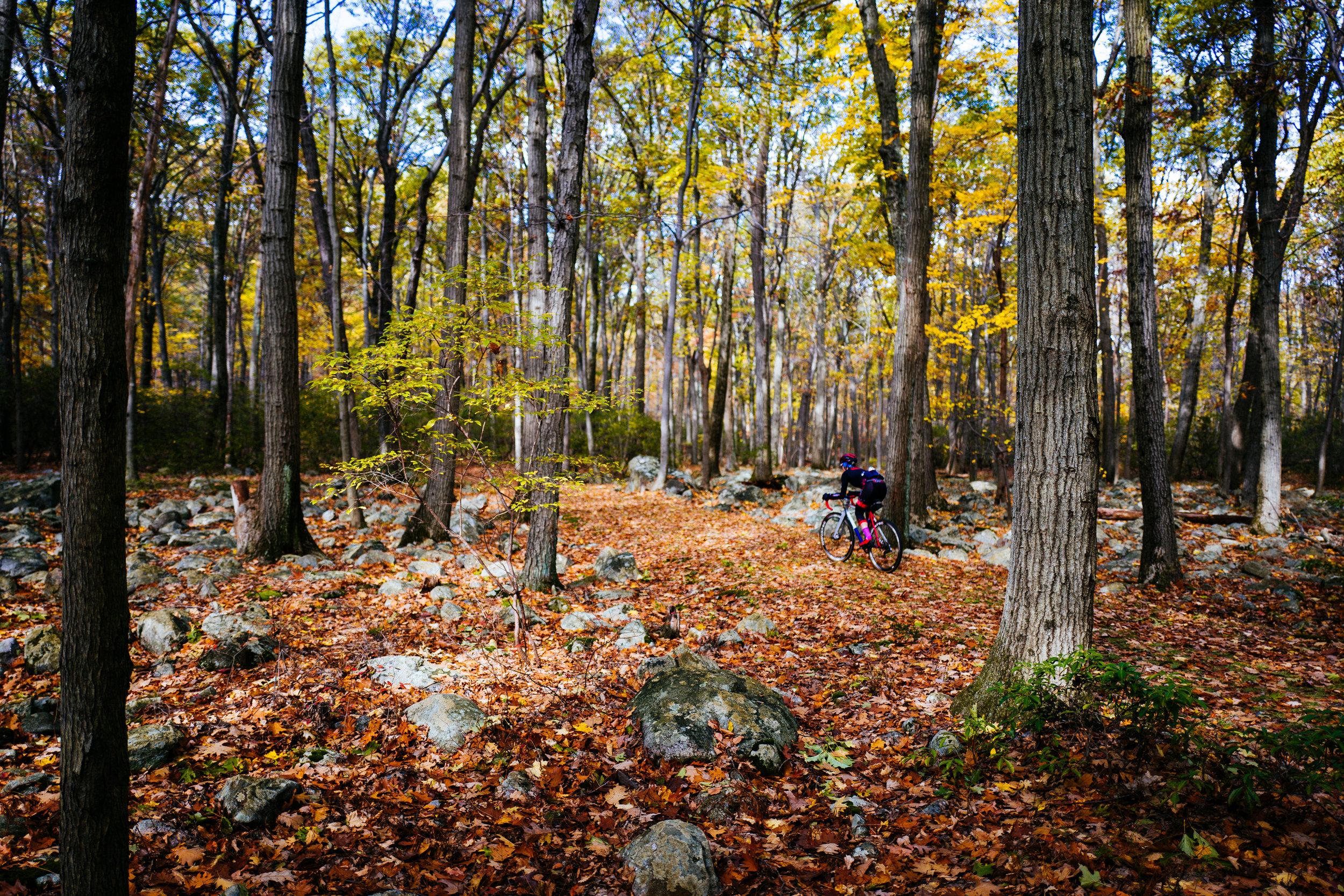 Photo Rhetoric - Fall Foliage-1000.jpg