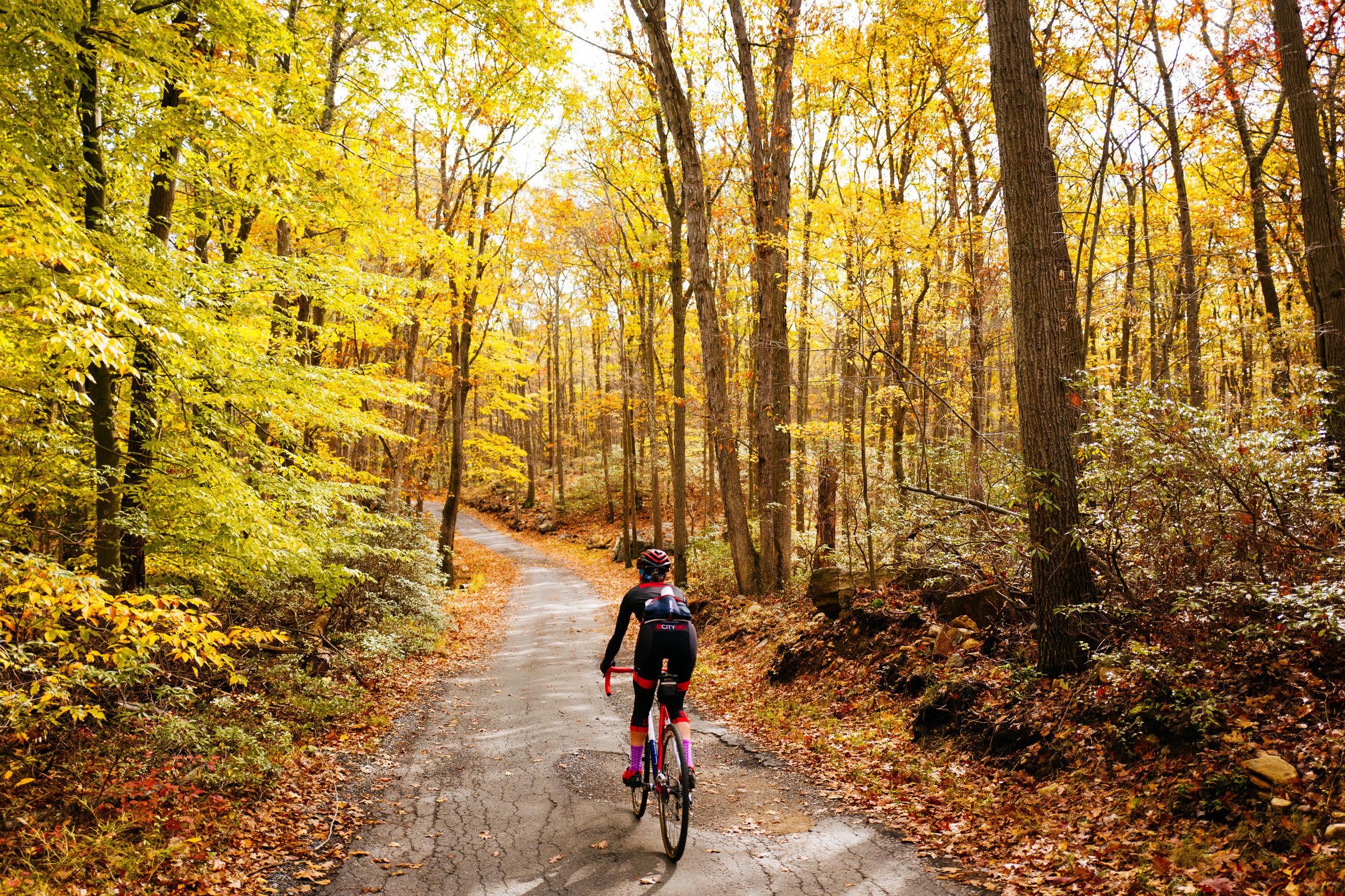 Photo Rhetoric - Fall Foliage-1013.jpg