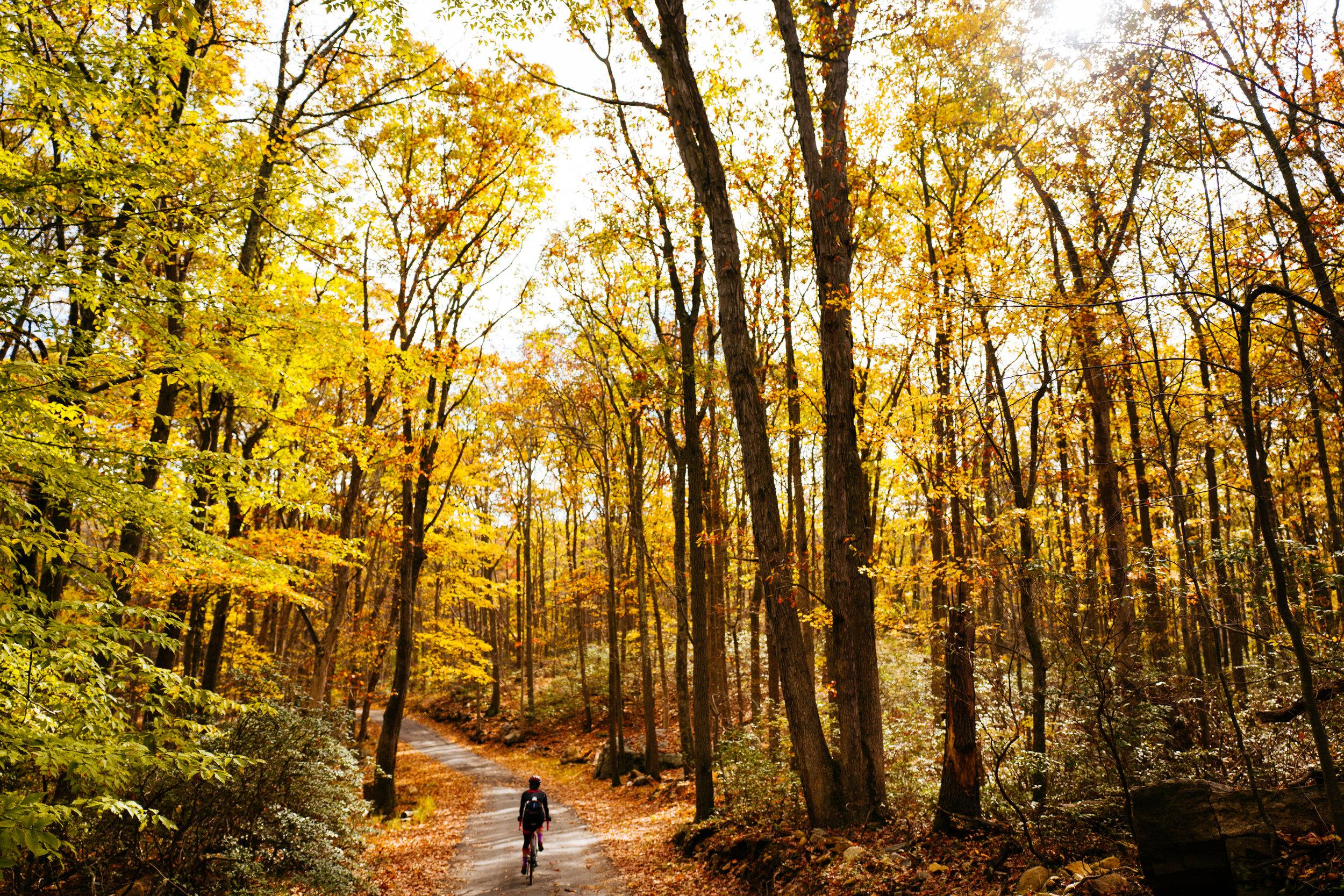 Photo Rhetoric - Fall Foliage-1016.jpg