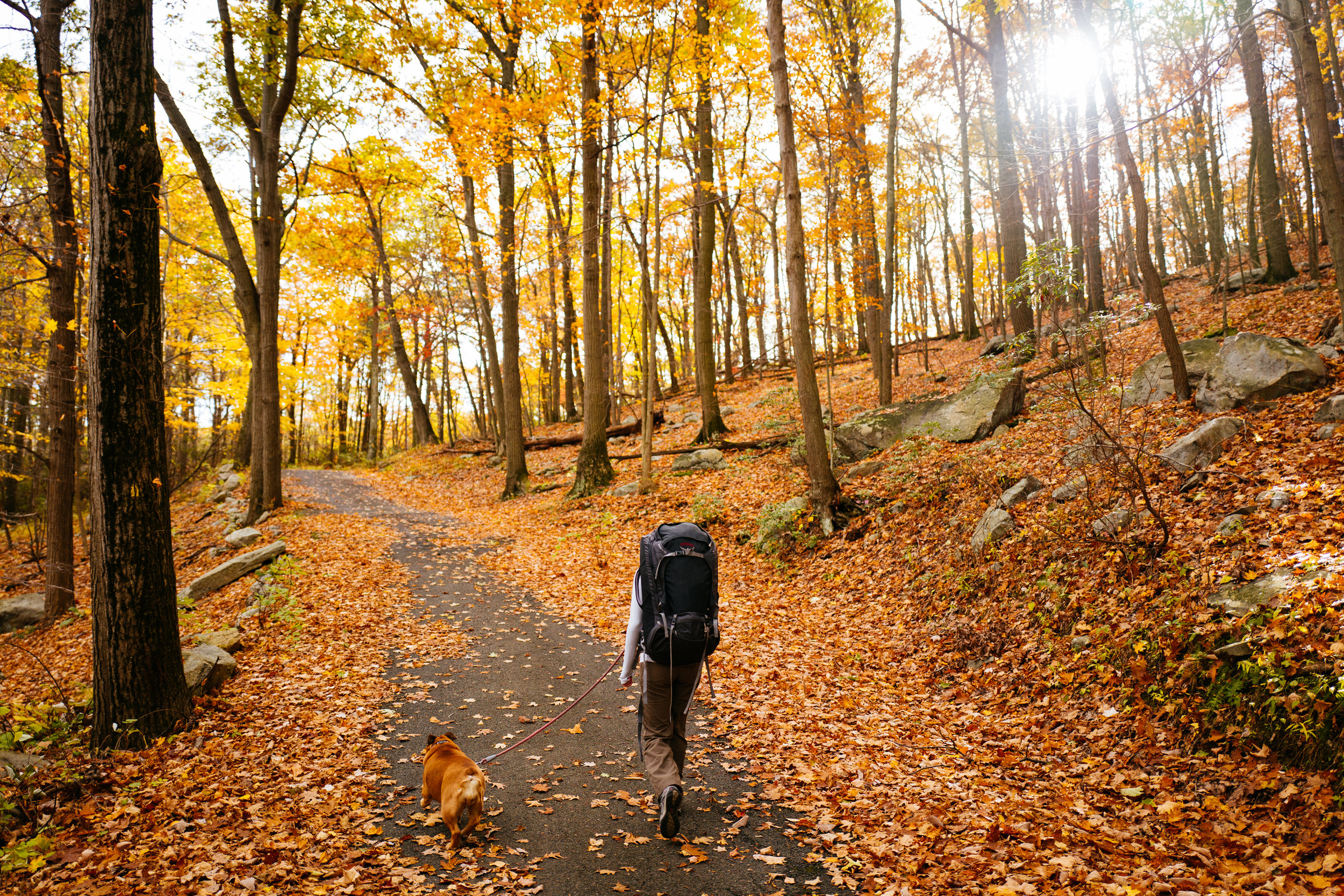 Photo Rhetoric - Fall Foliage-1031.jpg