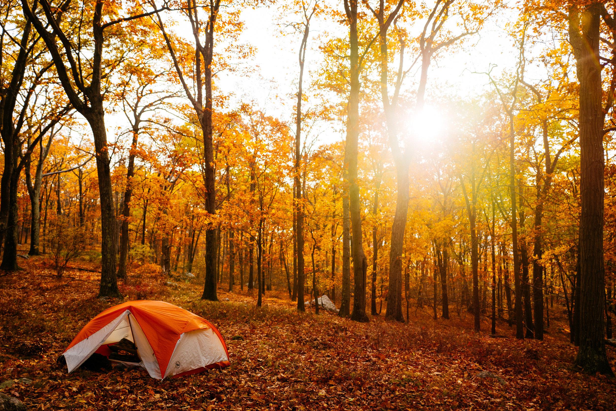 Photo Rhetoric - Fall Foliage-1044.jpg