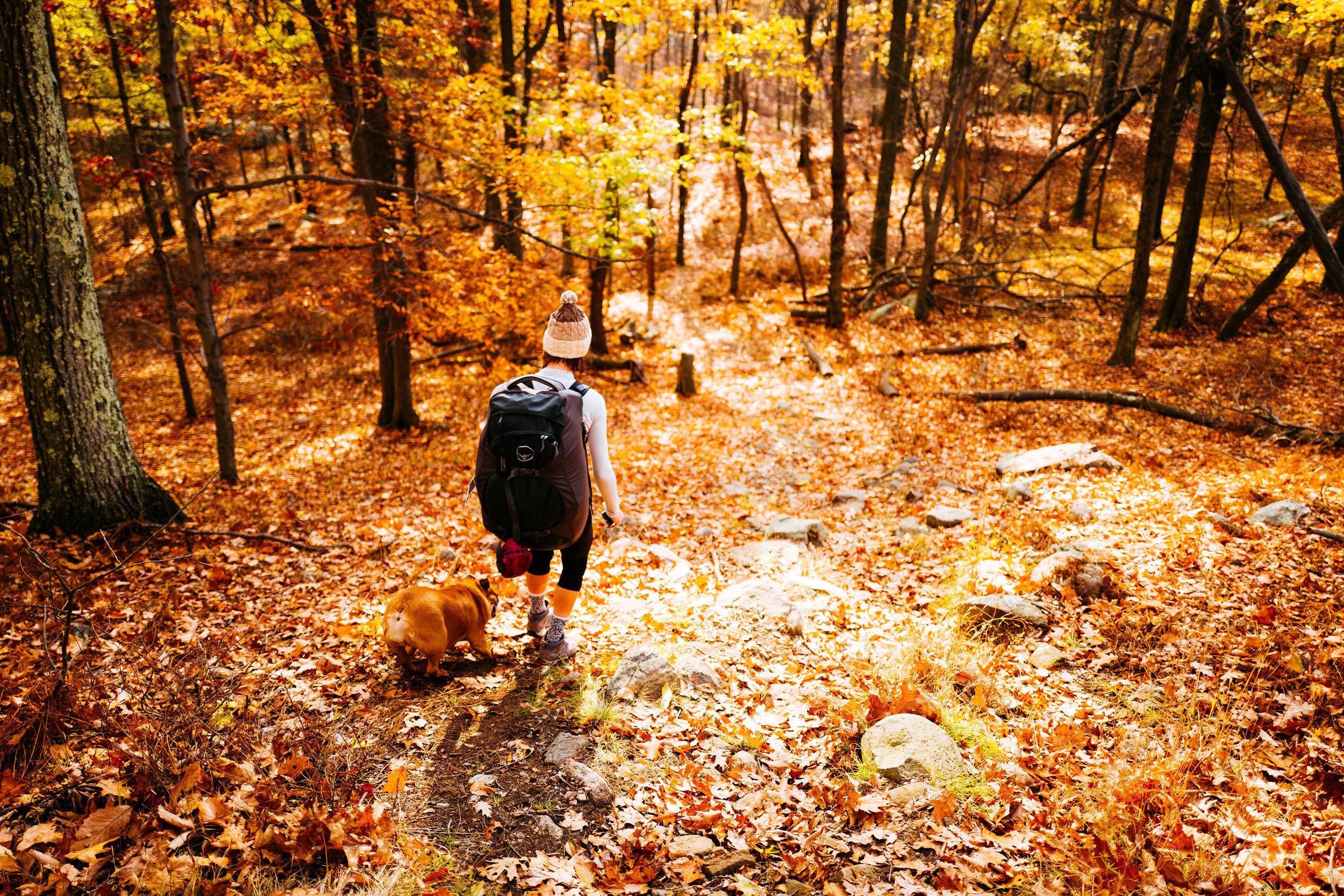 Photo Rhetoric - Fall Foliage-1051.jpg