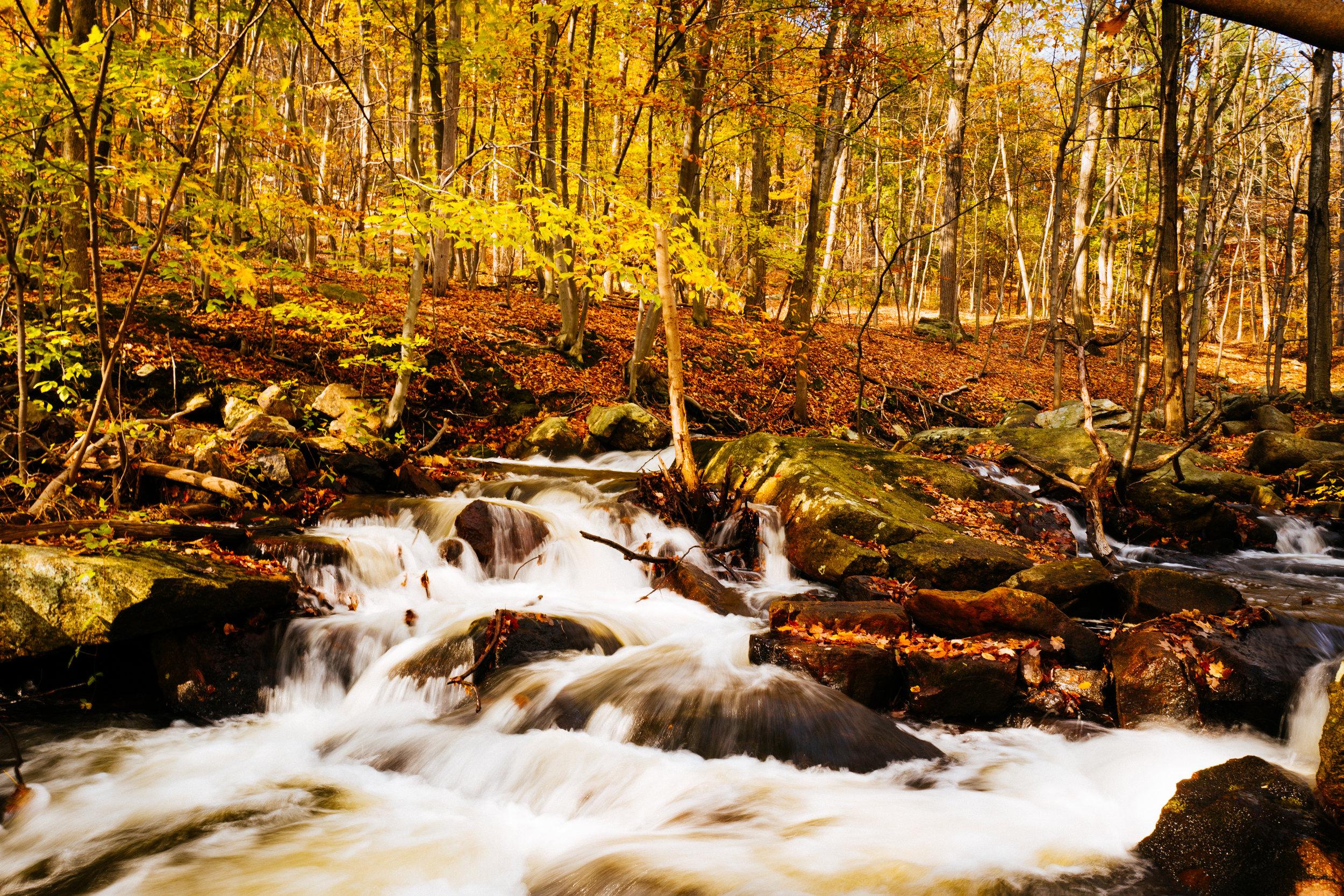 Photo Rhetoric - Fall Foliage-1055.jpg