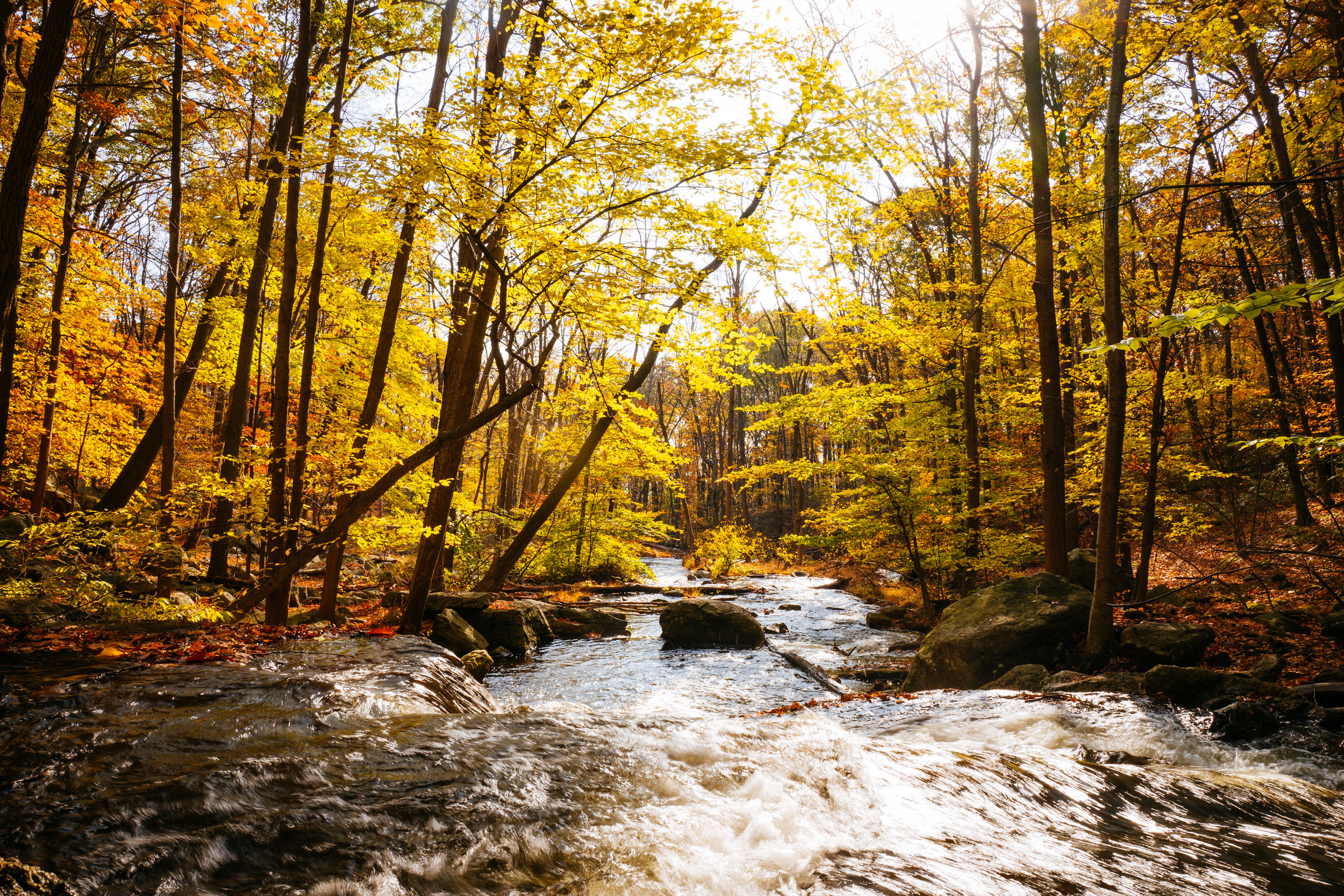 Photo Rhetoric - Fall Foliage-1054.jpg