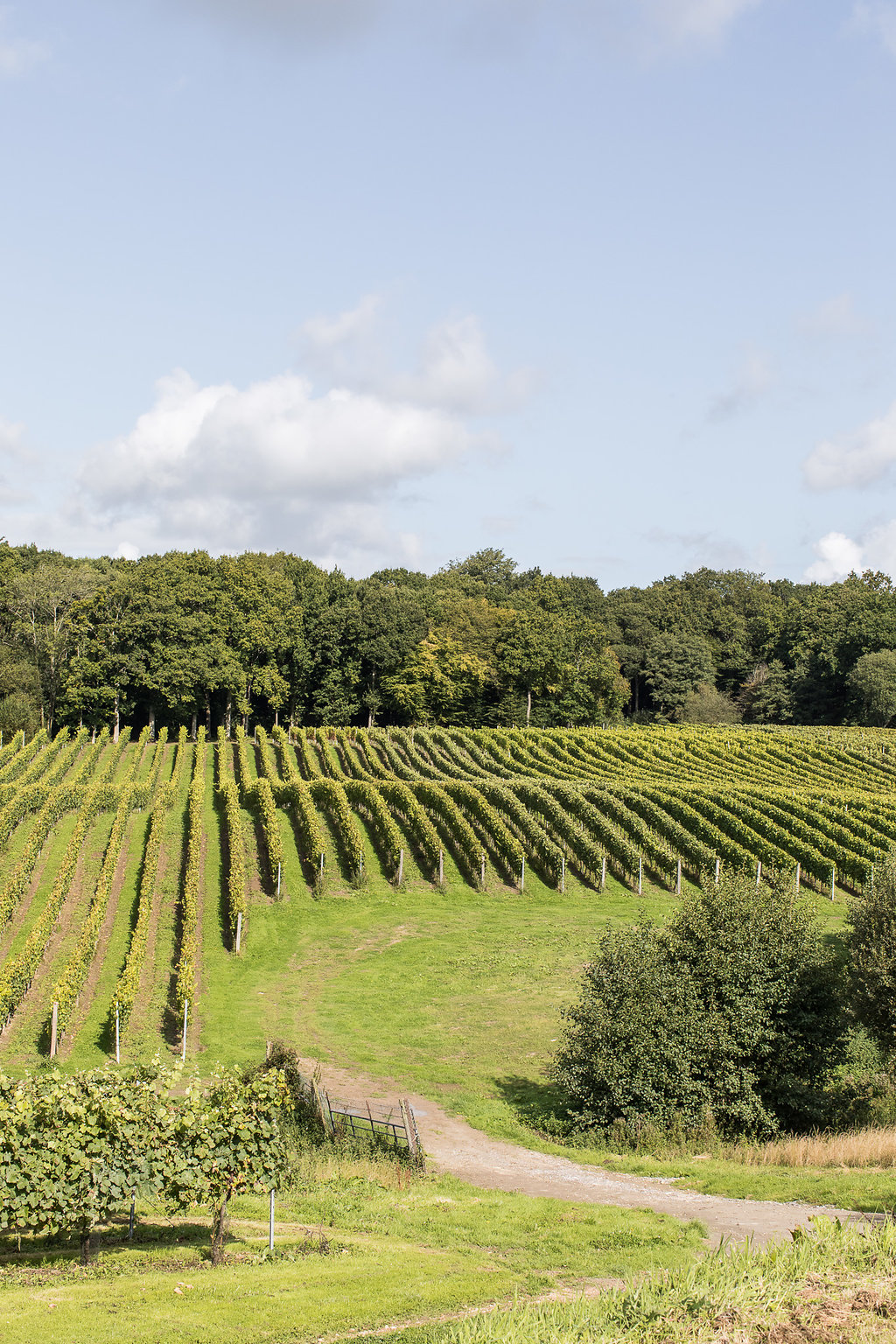 viva_vineyards_web-0077.jpg