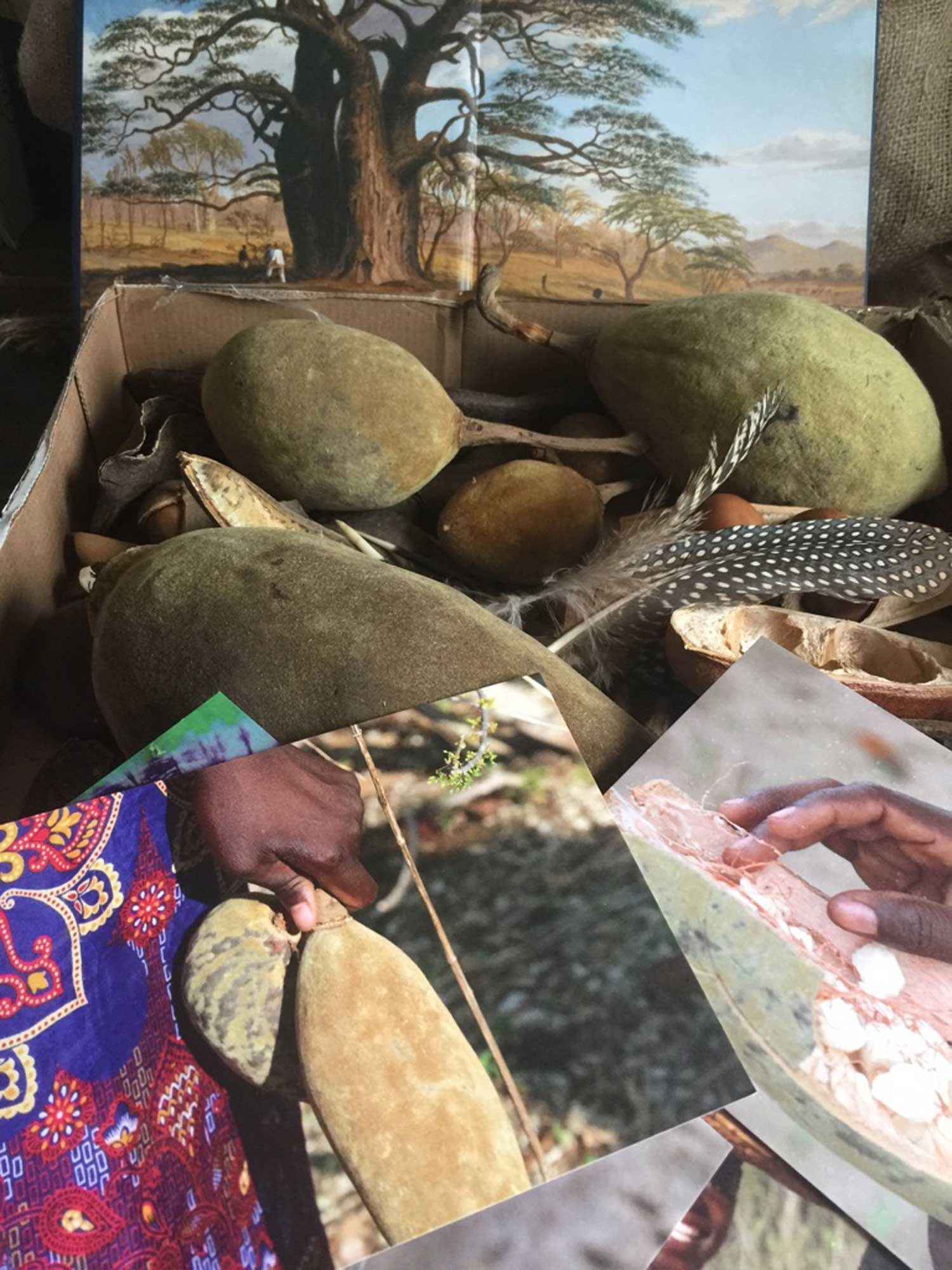 Baobabs, Guinea Fowl Feathers and seed pods from Zimbabwe