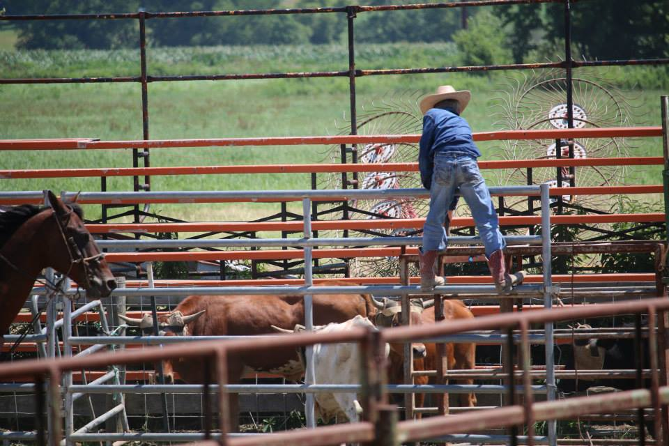 My oldest son spends his summers learning the value of hard work sorting cattle for my family's rodeo stock contracting company. He thinks he's earning money; I think he's learning the value of hard work and a sense of accomplishment.