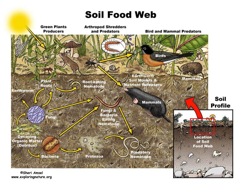soil_foodweb72.jpg
