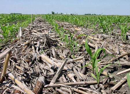 No-till management plants a new crop directly into the standing residue of the old crop, helping to prevent soil erosion and increase water infiltration.