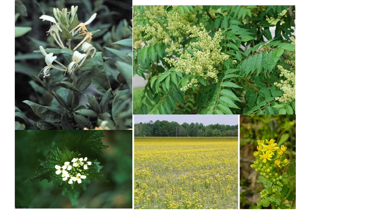 Invasive plants.png