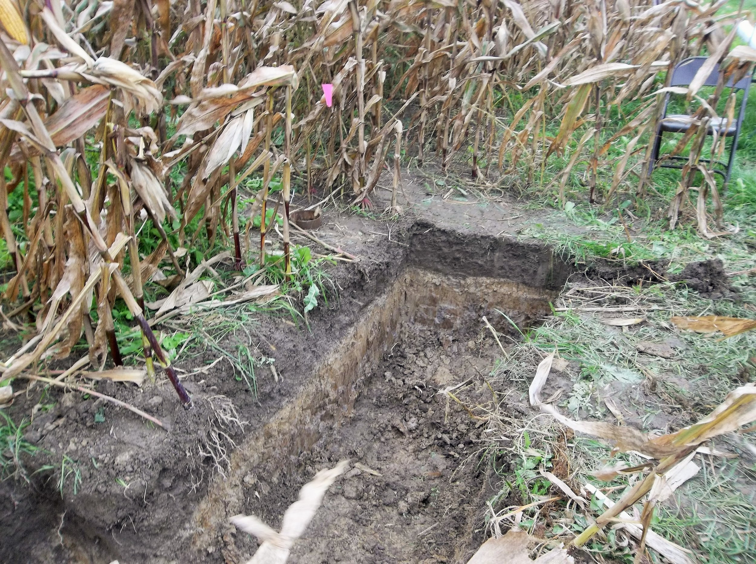 Soil test pit shows demarcation between soil types. Dark topsoil has been aggressively managed to raise organic matter content.