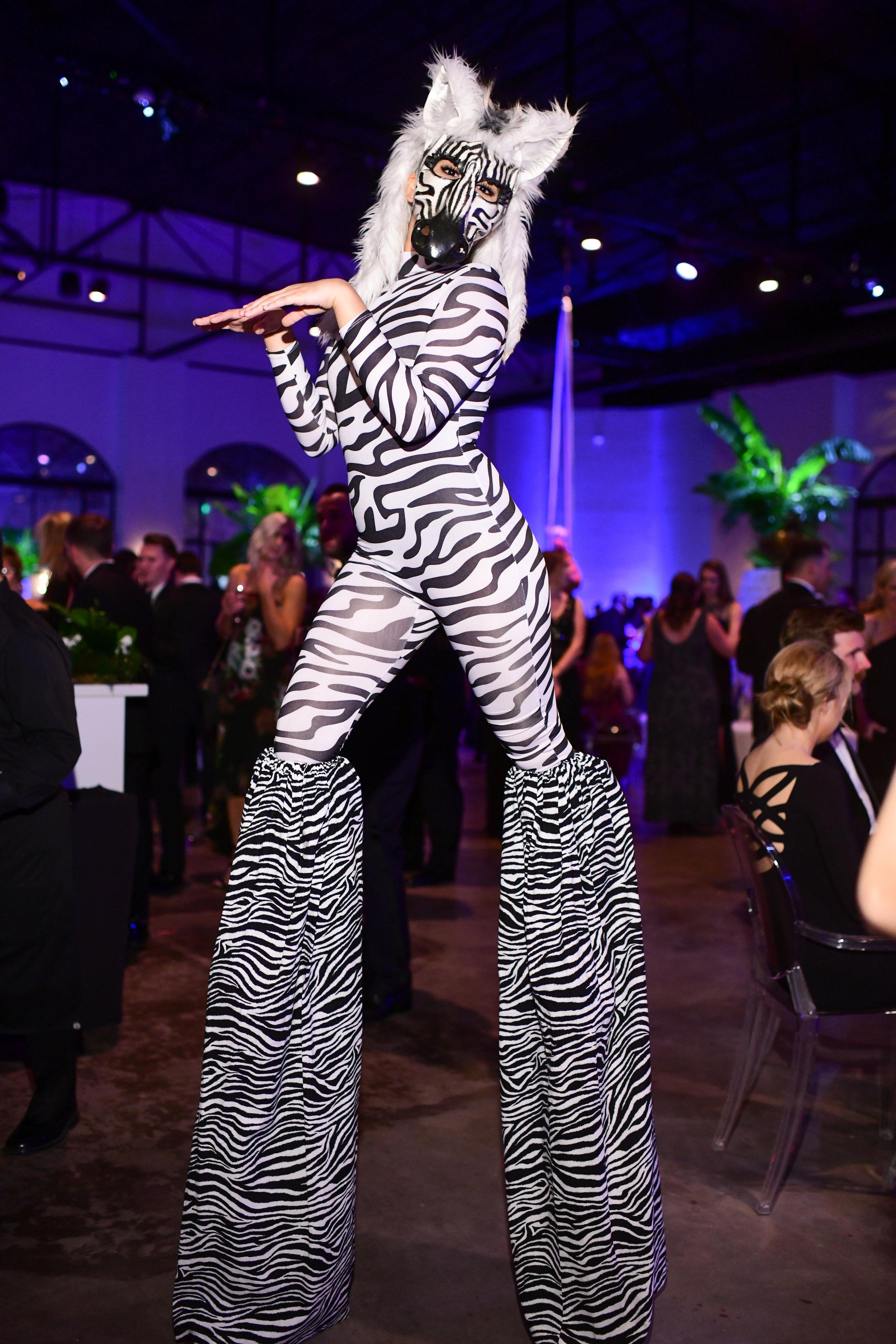 Zebra on stilts; Photo by Daniel Ortiz.jpg