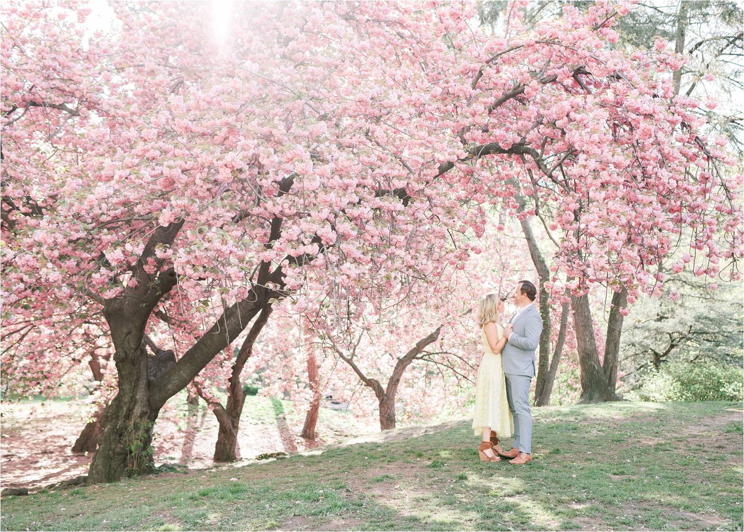 Cherry Blossom Engagement Photos in Central Park
