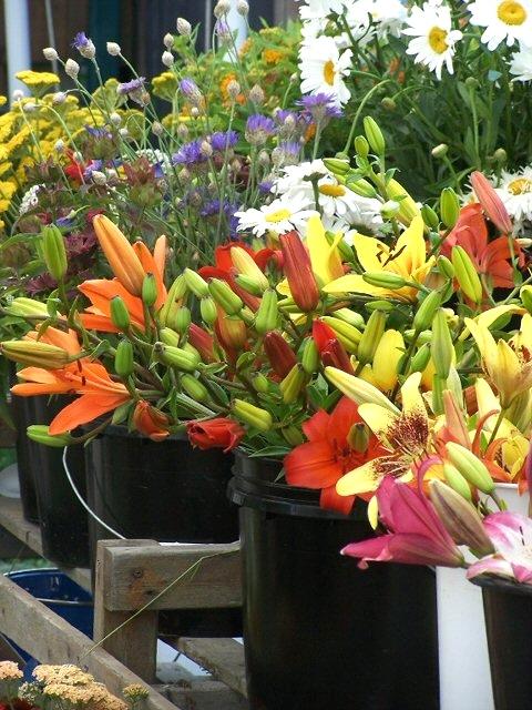 flowers-sweet-berry-farm-middletown-ri