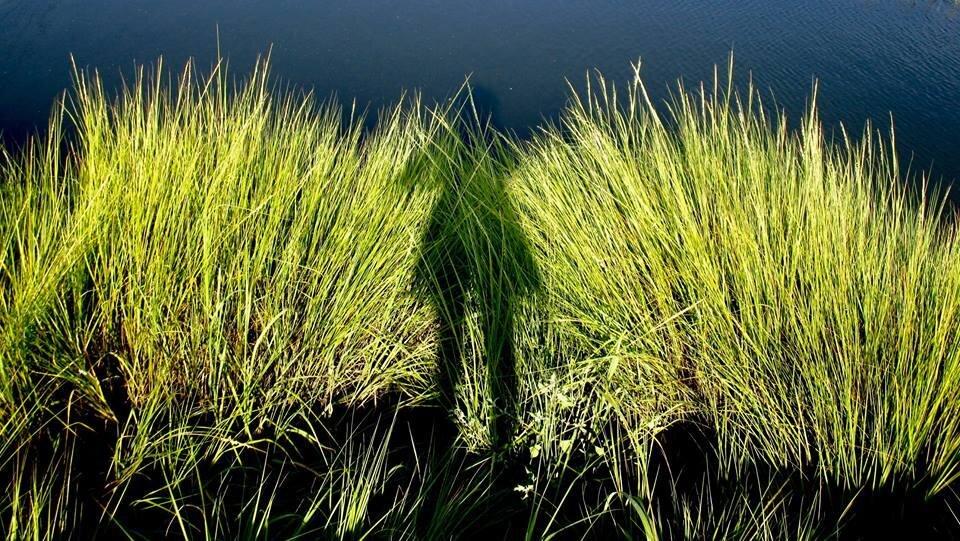"Self Portrait: ""Woman in a Grass Dress"""