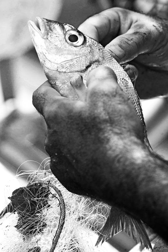 L'azienda copre tutta la filiera di produzione, dalla pesca, con più di 20 pescherecci, all'allevamento, dalla trasformazione alla commercializzazione internazionale.