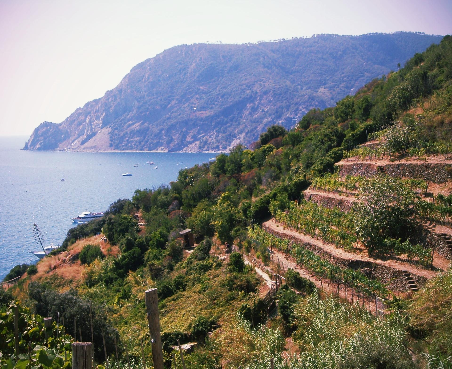 Terrazzamenti in Liguria.