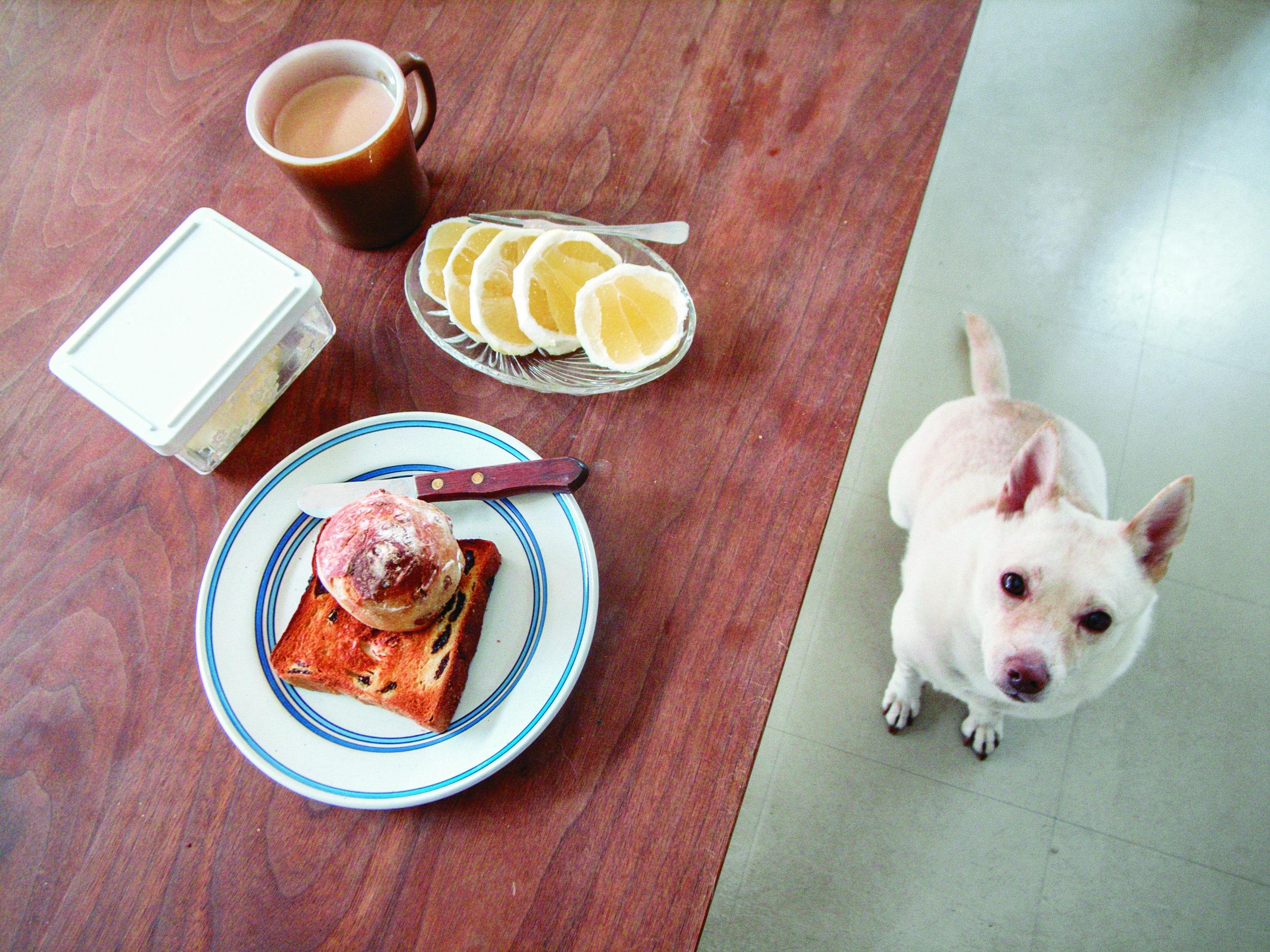 Natsuko Kuwahara ha iniziato a fotografare il suo animale domestico, Kipple, quattro anni e mezzo fa, dopo averla notata in giro durante la colazione. Foto Natsuko Kuwahara / Phaidon.