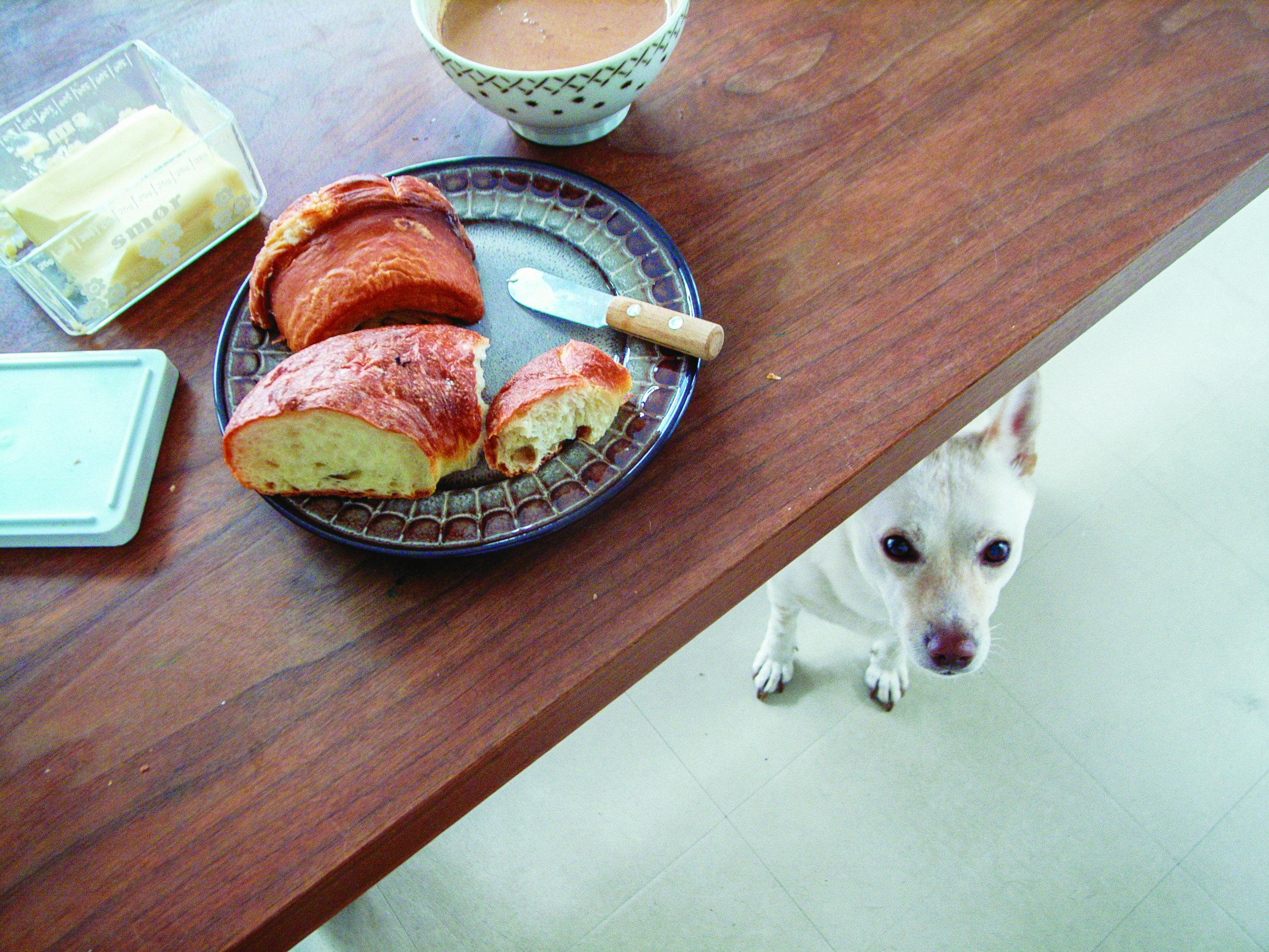 """Natsuko racconta che Kipple non è un cane particolarmente avido, ma ammette che l'unico cibo umano a cui non riesce a fare a meno è il pane. Foto di Natsuko Kuwahara, """"Bread and a Dog"""" Phaidon."""