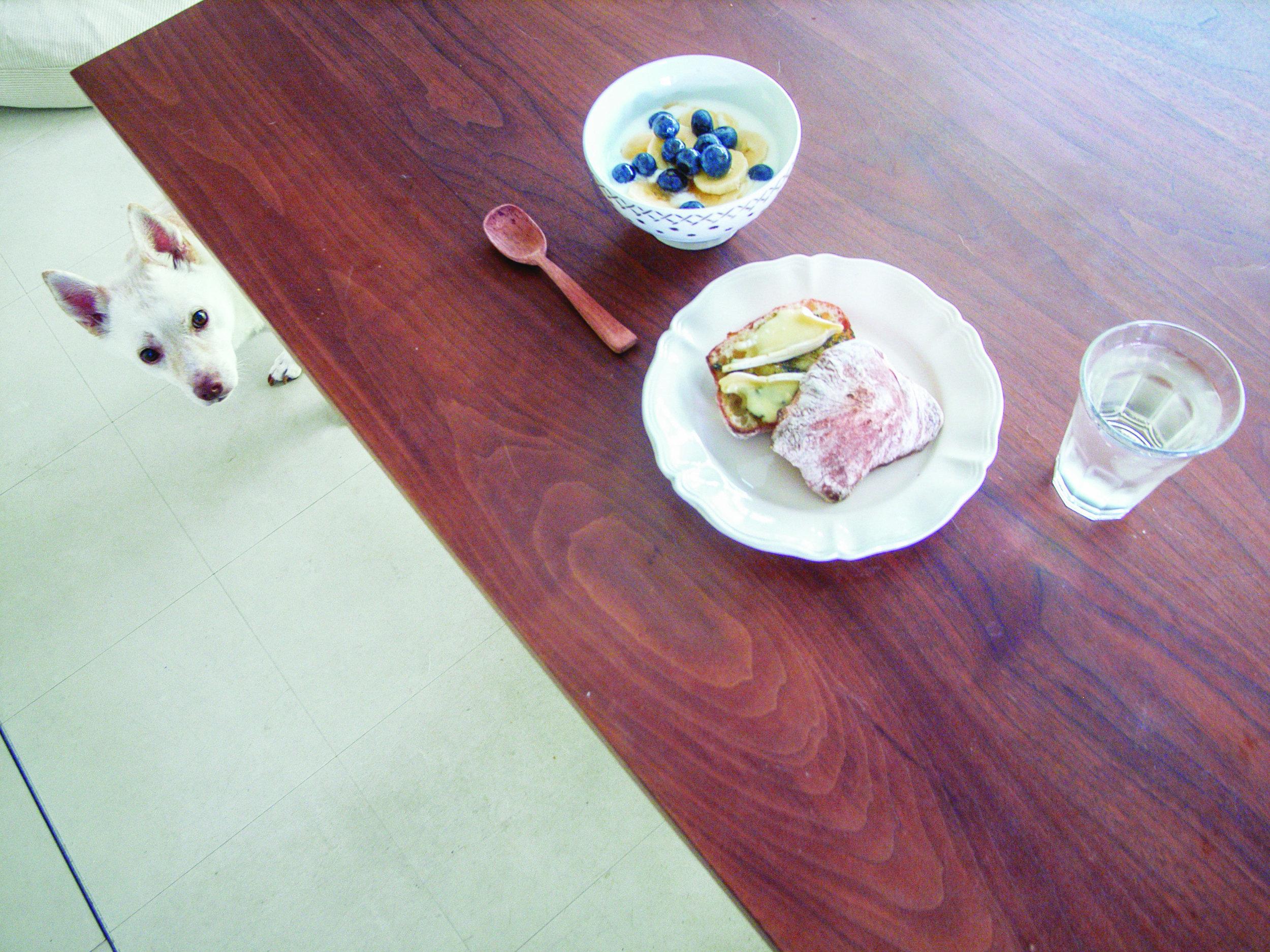 Natsuko, una specialista culinaria del distretto Nakano di Tokyo, ha adottato Kipple nove anni fa, dopo averla trovata su un sito web per la cura degli animali. Kuwahara lavora come culinary specialist, food stylist e fotografa. Foto Natsuko Kuwahara / Phaidon.