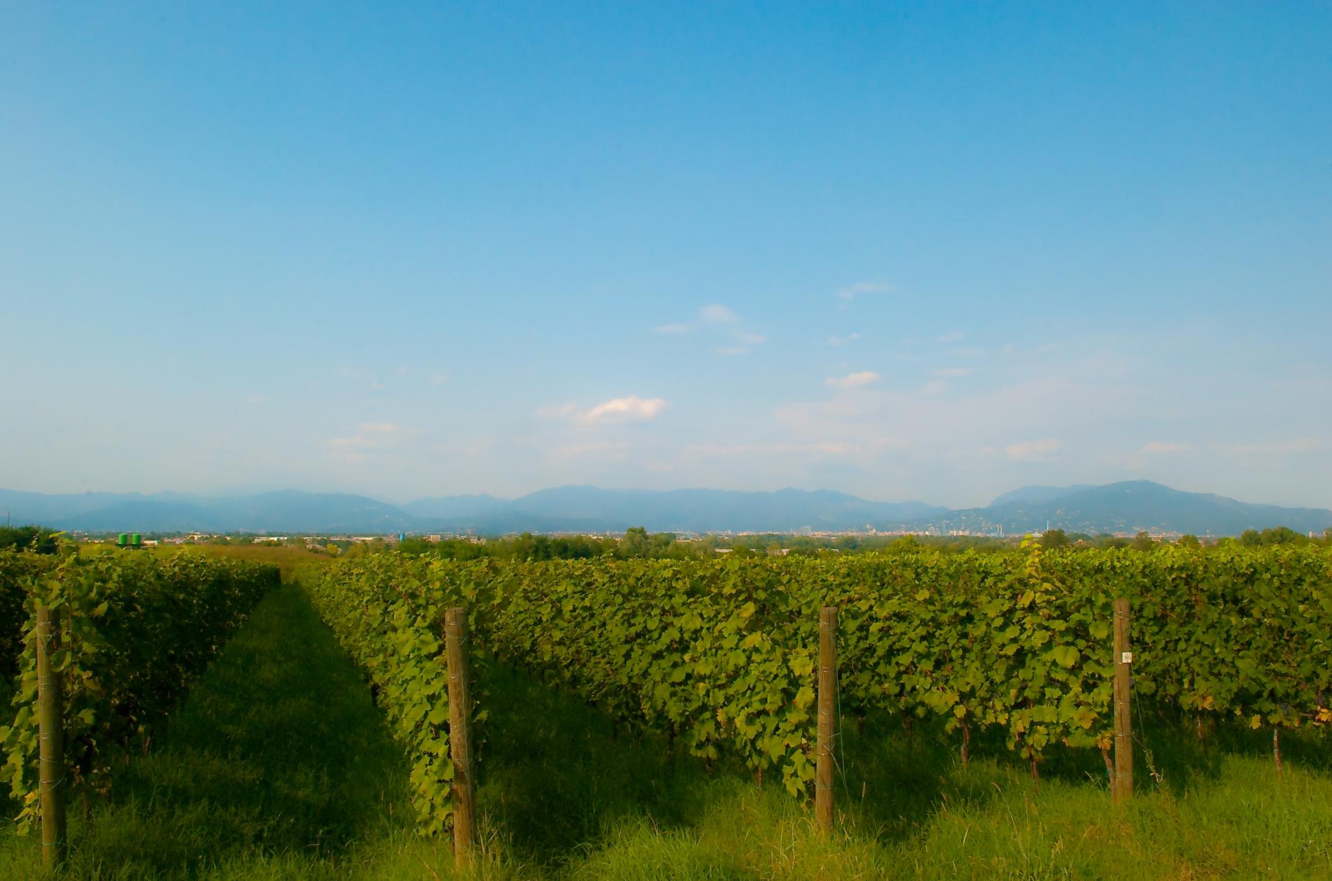 Monte_Netto_-_Settembre_2010_-_panoramio-1.jpg