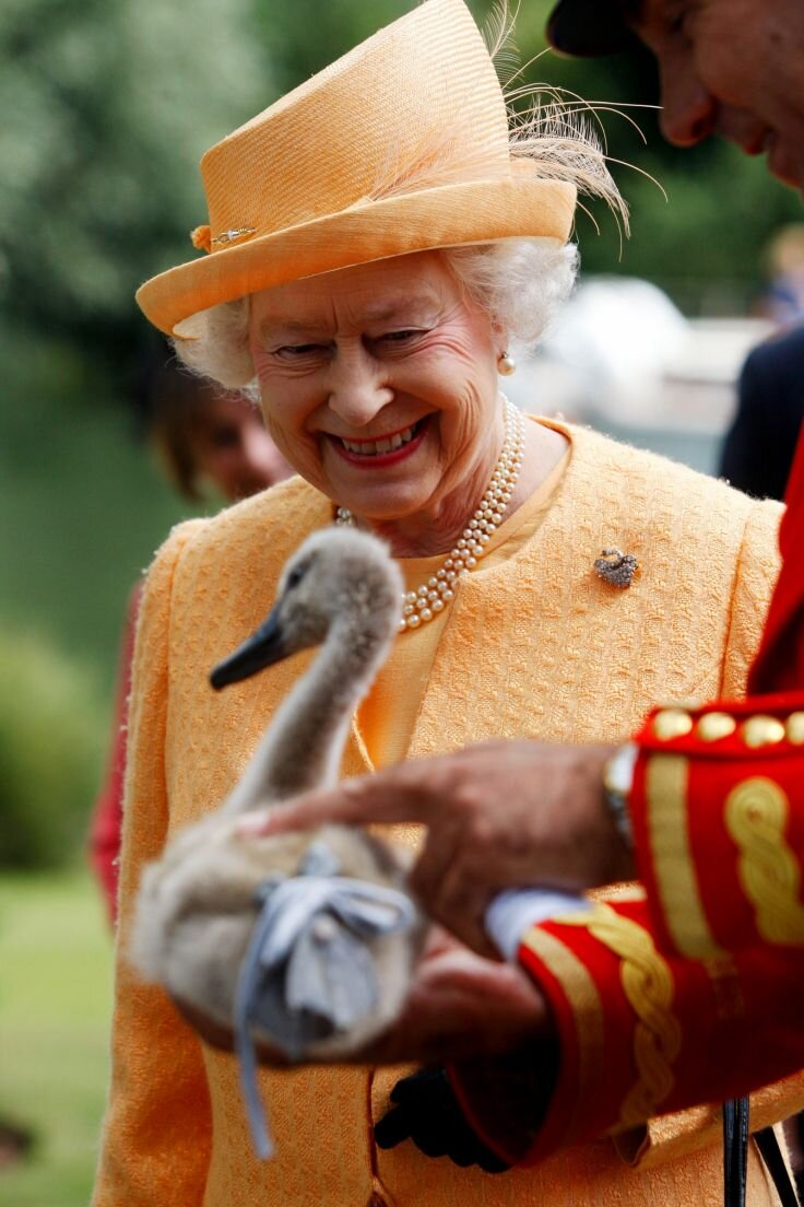 La Regina Elisabetta II presenza alla cerimonia del Royal Swan Upping, in cui vengono contati i cigni nel Tamigi, che per volontà di Enrico IV dal 1482 sono di proprietà della corona.