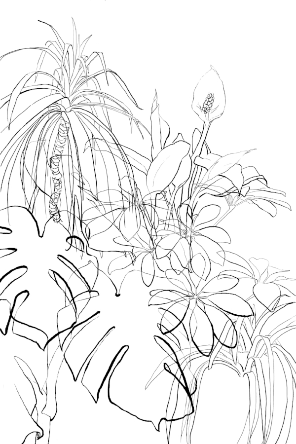 I created a line drawing of each plant including the covered portion