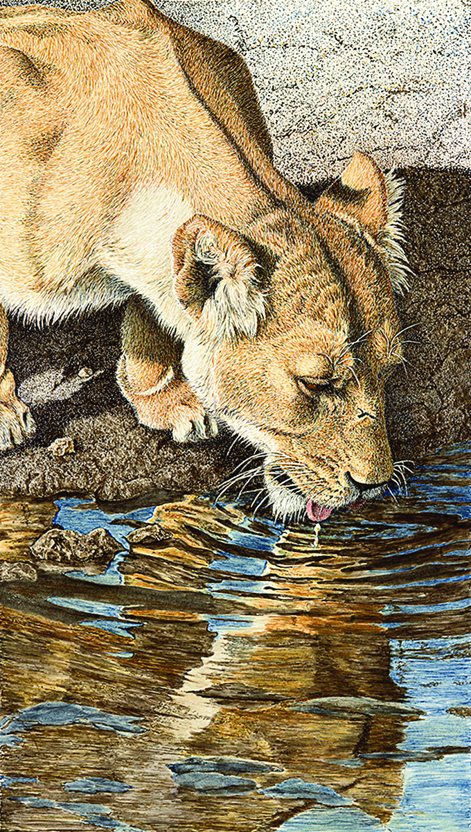 Eyes of Safari, Taste of Gold drawing by Sherry Steele.
