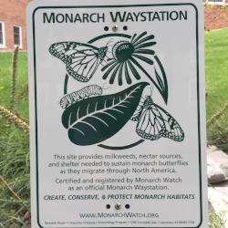 monarch waystation.JPG