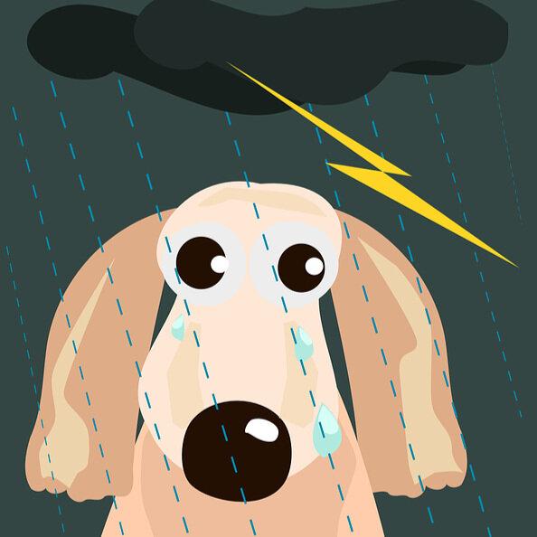 dog+in+thunderstorm.jpg