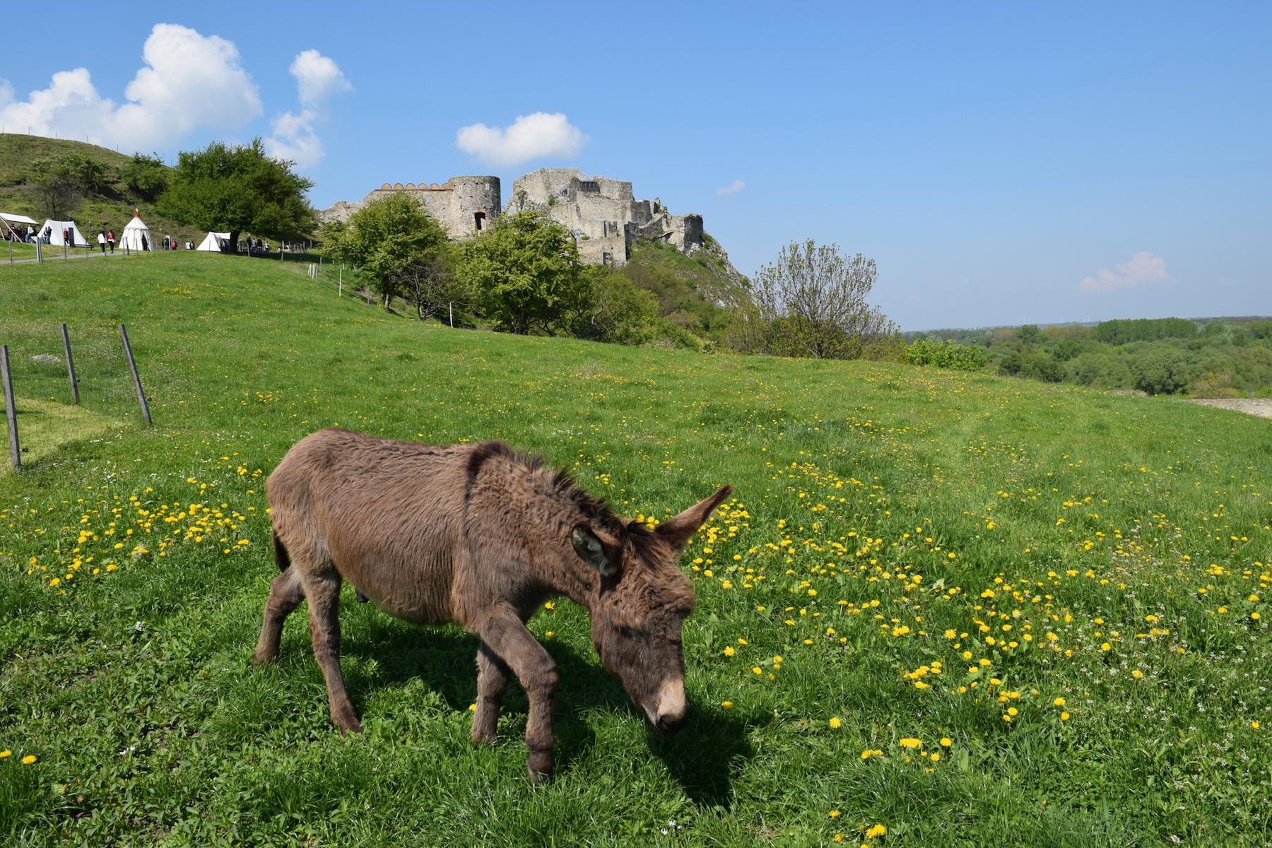 donkeydevincastle
