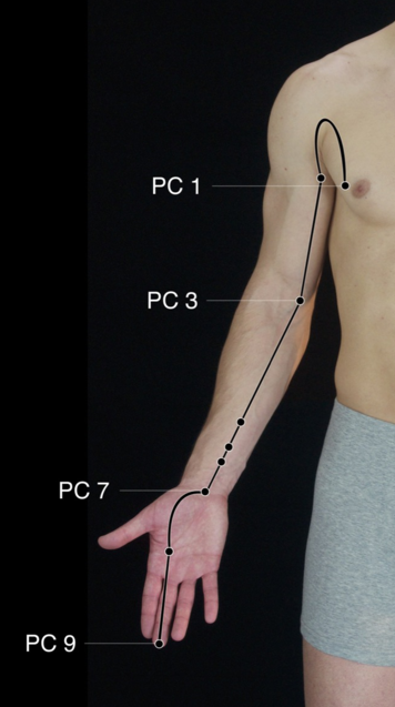 Pericardium Channel.PNG