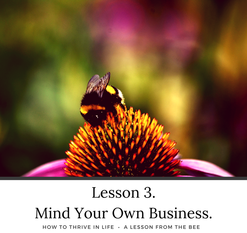 How to Thrive in Life. A Lesson From The Bee