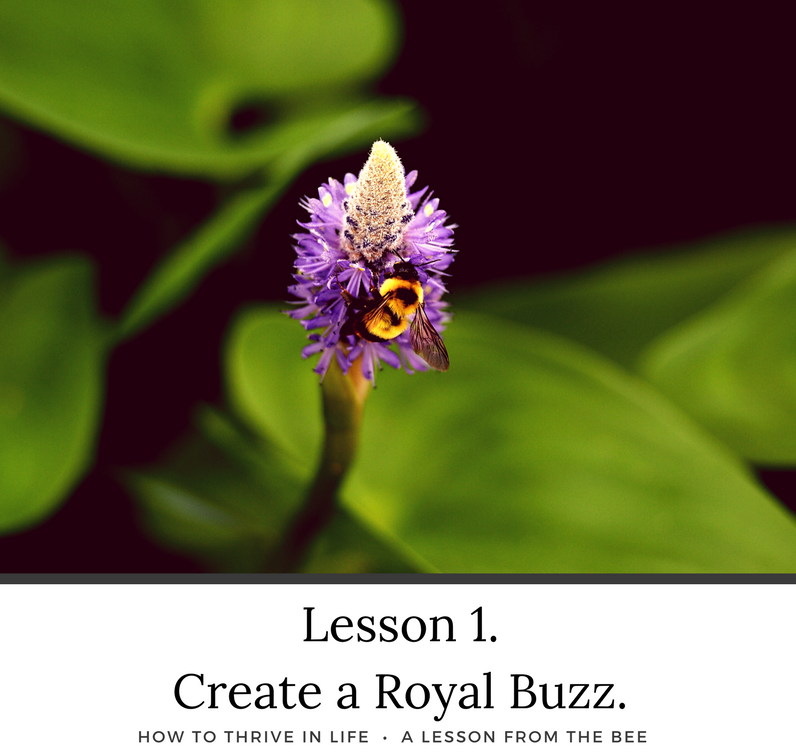 How To Thrive in Life. A Lesson from the Bee.