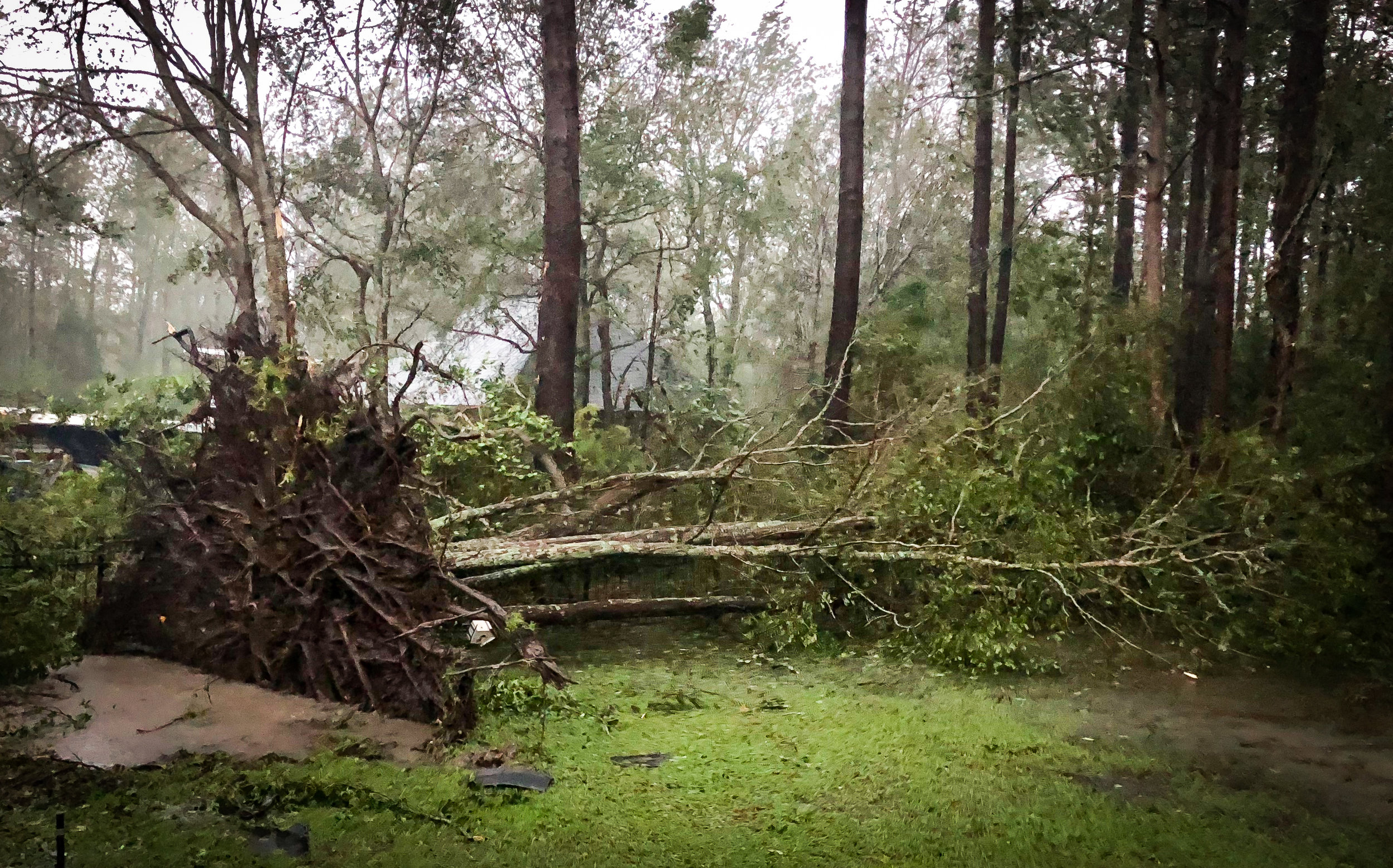 """A tree fell in our backyard narrowly missing my mother's room. The root system, to put things in perspective, was a head taller than my husband who is 6'5""""."""