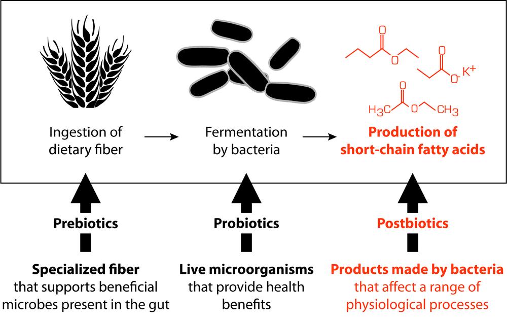 biotics.jpeg